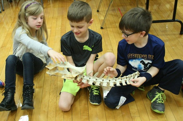 Three students examining a skeleton.