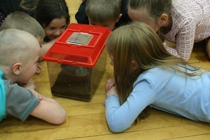 Group of students gathered around a plastic box with a frog in it.